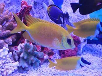 壁纸 动物 海底 海底世界 海洋馆 水族馆 鱼 鱼类 350_263